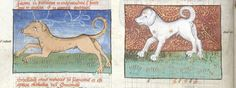 """1331-1391, Comte de Foix's book about hunting included care of his greyhounds: kennels to be built off the ground, w. loft to be cool in the summer & warm in the winter, fresh straw added daily & a door opening to a sunny yard, so that """"the houndes may go withoute to play when them liketh for it is grete likyng for the houndes whan thei may goon in and out at their lust."""" """"I speak to my hounds as I would a man and they understand me and do as I wish better than any other man...."""""""
