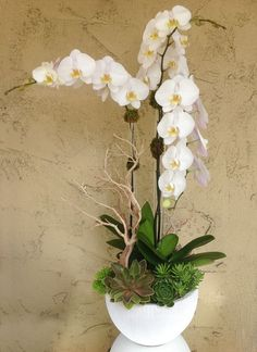 Orchid-Perfection