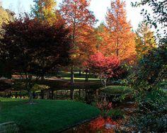 Designing your garden with conifers www.fiskars.com