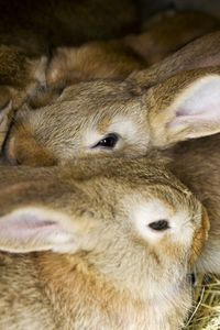 If you have rabbits, you have manure to manage. Whether for pets or meat, rabbits produce a lot of manure for their size. An adult rabbit will create about 50 lbs. of manure per. Raising Rabbits For Meat, Meat Rabbits, Polo Lacoste, Bird House Kits, Bird Aviary, Worm Farm, Worm Composting, Rabbit Hutches, Homesteads