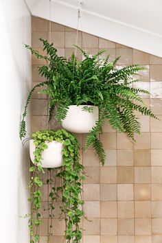My bathroom renovation – it's all about terrazzo and Moroccan tiles – We Are Scout - Modern Moroccan Bathroom, Moroccan Tiles, Moroccan Decor, Bohemian Bathroom, Turkish Tiles, Bathroom Storage Ladder, Timber Shelves, Bathroom Inspiration, Bathroom Ideas