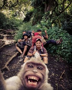Who better to take the selfie? Caption this photo 😜 Mount Slamet, Indonesia. Photo by - - - Funny Animal Pictures, Funny Photos, Cool Photos, Hilarious Pictures, Baby Animals, Funny Animals, Cute Animals, Nature Animals, Photographie National Geographic