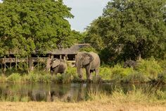 Animals have been frequenting the water sources around the reserve as a result of a drier than usual summer. Private Games, Water Sources, Game Reserve, Time Of The Year, Snuggles, South Africa, Safari, Elephant, Summer