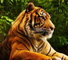 animals beautiful Tiger – Animals Other HD Desktop Wallpaper Animals Images, Nature Animals, Cute Animals, Wild Animals, Unique Animals, Forest Animals, Tier Wallpaper, Animal Wallpaper, Seagrass Wallpaper