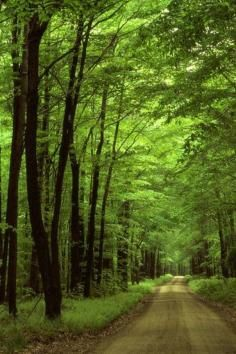 Take a hike and more in Sumter National Forest in South Carolina.