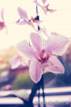 Orchideen Blüten - Blumen