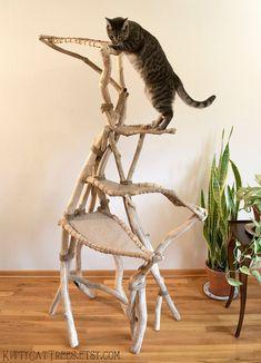 Cat Care Tips, Dog Care, Cat Climbing Tree, Cat House Diy, Wood Cat, Pumpkin Dog Treats, Cat Scratching Post, Happy Animals, Animals Dog