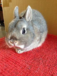 Stinky my netherland dwarf bunny xxxx