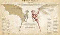 Anatomica Draconis by KatePfeilschiefter.deviantart.com on @deviantART