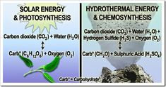 Autotrophs chemosynthesis