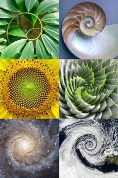 Fractals, the art of nature. Even DNA itself follows the golden spiral.