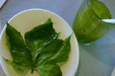 Chaya or tree spinach, is a large, fast-growing leafy perennial shrub that is believed to have originated in the Yucatán Peninsula of