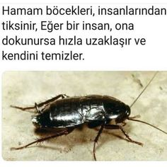 Asıl biz ondan tiksinitoruz be! Ridiculous Pictures, Funny Pictures, Animal Facts, Galaxy Wallpaper, Karma, Did You Know, Fun Facts, Bee, Knowledge
