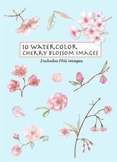 CLIP ART- Watercolor Vintage Cherry Blossom Set. 10 Images. Digital Download. Flower. Nature.