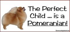 The Perfect Child is a POMERANIAN!  PHOTO Window Cling