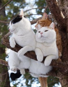 枝の上の3匹 - かご猫 Blog                                                                                                                                                                                 もっと見る