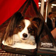 Hanging Pet Pyramid - 1 Level -  - Sturdi Products - 4