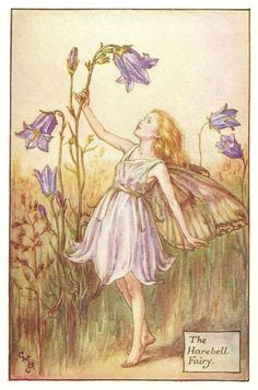"""Vintage print 'The Harebell Fairy' by Cicely Mary Barker from """"The Book of the Flower Fairies""""; Poem and Pictures by Cicely Mary Barker, Published by Blackie & Son Limited, London [Flower Fairies - Summer] Cicely Mary Barker, Illustration Art Nouveau, Fantasy Illustration, Flower Fairies, Fairy Land, Fairy Tales, Vintage Fairies, Plant Drawing, Drawing Flowers"""
