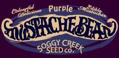 Heirloom Purple Bean Seeds