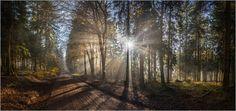 Christian Müringer - Sonnenstrahlen im Herbstwald Panorama