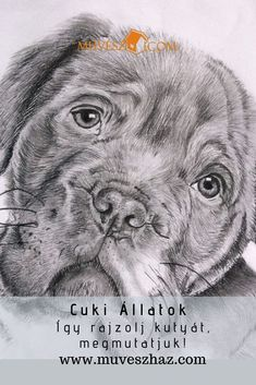 Cuki Állatok a kutyusok, és nagyon jó lenne, ha saját kis kedvencünket le tudnánk rajzolni! Megmutatjuk hogyan csináld: Harry Potter