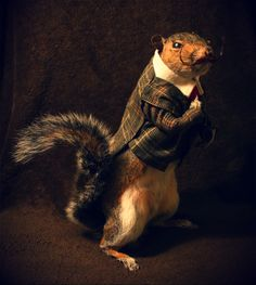 Earl the discerning Squirrel