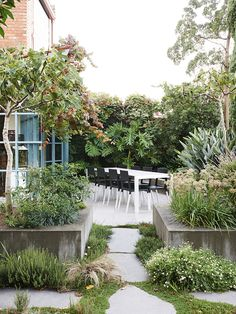 Raised concrete beds frame the entertaining area at the rear of the house. Two fig trees (Ficus carica) provide fruit in late summer. A huge fruit salad plant (Monstera deliciosa) grows on the boundary wall, and a large bird of paradise (Strelitzia nicolai) provides year round foliage interest. Photo – Eve Wilson. Production – Lucy Feagins/The Design Files.