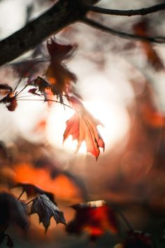 Bokeh of Autumn Leaves Autumn Day, Autumn Trees, Autumn Leaves, Dark Autumn, Winter, Autumn Aesthetic, Seasons Of The Year, Autumn Photography, Fall Pictures