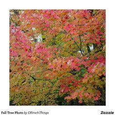 Fall Tree Photo Poster