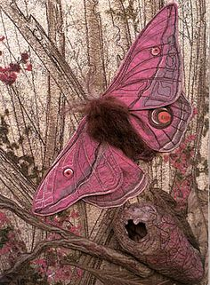 pink moth photo images - Google Search