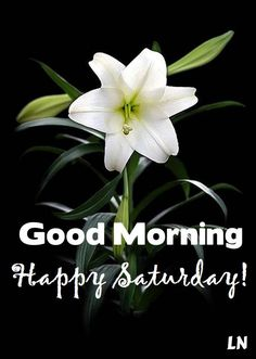 60 Good Morning Saturday Images with Beautiful Quotes – LittleNivi.Com Happy Saturday Pictures, Good Morning Saturday Images, Happy Saturday Quotes, Saturday Greetings, Happy Day Quotes, Good Saturday, Good Morning Funny, Good Morning Picture, Good Morning Everyone