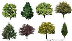 cut-out trees for photoshop - download:
