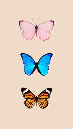 Butterfly Wallpaper/background iPhone q Butterfly Wallpaper Iphone, Iphone Background Wallpaper, Iphone Backgrounds, Phone Wallpapers, Pretty Backgrounds, Wallpaper Free, Animal Wallpaper, Pattern Wallpaper, Wallpaper Lockscreen