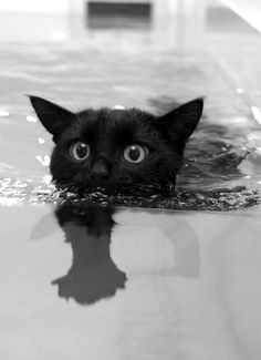 A scared, black cat swimming in a small pool.