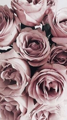 Beautiful Flowers, Pretty Flowers, Summer Flowers, Cut Flowers, Dried Flowers, Colorful Flowers, Blush Roses, Rose Mauve, Pink Roses