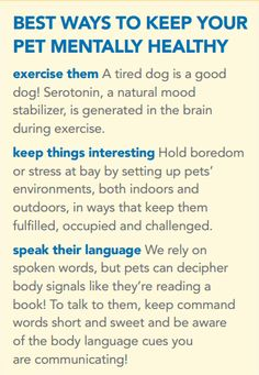 3 Tips To Keep Your Pet Mentally Healthy