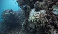 Decomposing coral on the Great Barrier Reef. All mentions of Australia were removed from Unesco's report on climate change and world heritage sites.