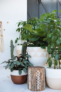 P&S Pots in the Showroom. Photo by Bobby and Tide
