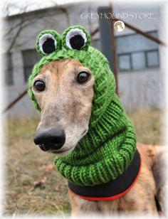 FROG HAT for greyhound/galgo/lurcher by Greyhoundstore on Etsy, $54.50