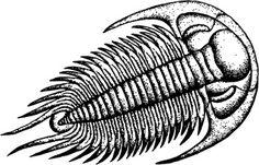 vector engraving: Trilobite
