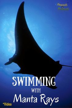 Swimming With Manta Rays in Hawaii...at Night! - Peanuts or Pretzels