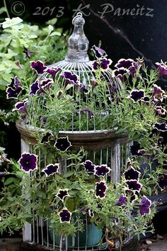 Birdcage flowers! I think I will use my lanterns and birdcages meant as lanterns this way in the summer.