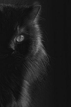 Gato Negro like my kitty :) Pretty Cats, Beautiful Cats, Animals Beautiful, Cute Animals, Pretty Kitty, Beautiful Things, Lovely Eyes, Beautiful Gorgeous, Simply Beautiful