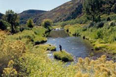 Dolores River, Colorado: Professionally guided fly fishing adventures on the upper and lower Dolores River in southwest Colorado, while staying in Telluride.