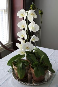 Love the juxtaposition of the silver with the orchids