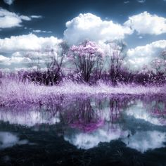 Trees by Dominique Toussaint on Landscape Photos, Landscape Photography, Photo Boards, Reflection, Trees, Clouds, Outdoor, Outdoors, Scenery Photography