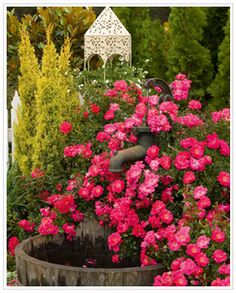 Monrovia's Flower Carpet® Pink Supreme Ground Cover Rose details and information. Learn more about Monrovia plants and best practices for best possible plant performance. Beautiful Gardens, Beautiful Flowers, Ground Cover Roses, Ronsard Rose, Monrovia Plants, Rose Varieties, Easy Care Plants, Plant Catalogs, Growing Roses