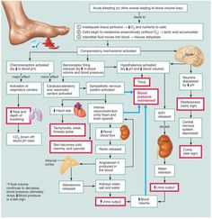 types of shock chart | hypovolemic shock | critical care, Skeleton