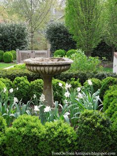 Birdbath surrounded by boxwood