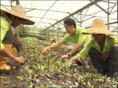 Latest Organic Food Singapore Retailer News - http://singapore-mega.com/latest-organic-food-singapore-retailer-news/